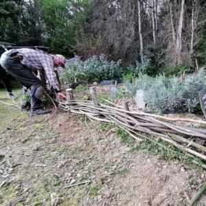 Tressage de plessis pour jardin